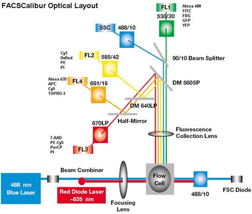 Cbbc Gt Equipment Gt Facscalibur